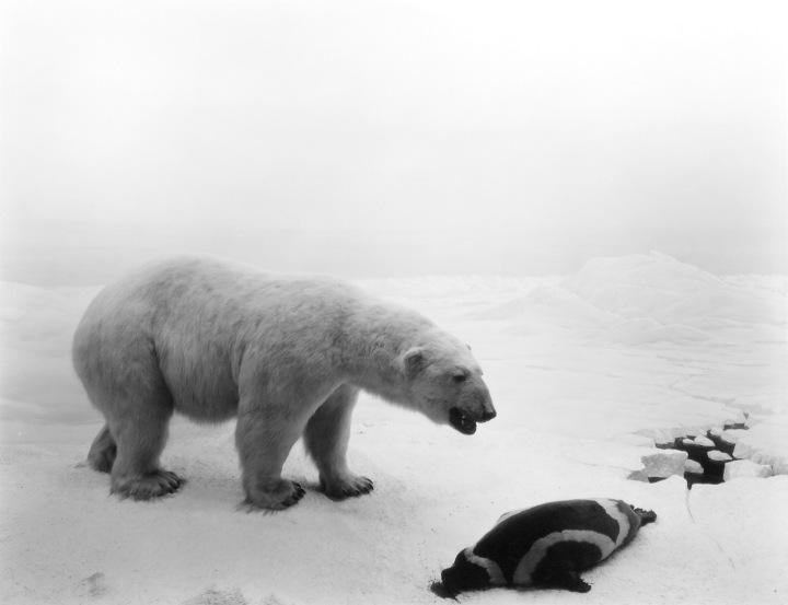 01.-Polar-Bear
